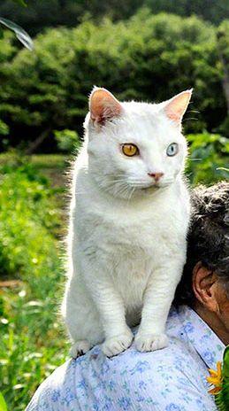 http://www.demilked.com/grandma-and-odd-eyed-cat-miyoko-ihara/