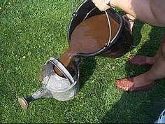 Kompostový čaj – hnojivo, za ktoré vás budú rastliny milovať - Záhradkárčenie - Záhrada a príroda | Hobby portál