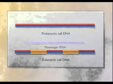 cDNA: Complementary DNA [HD Animation] - YouTube