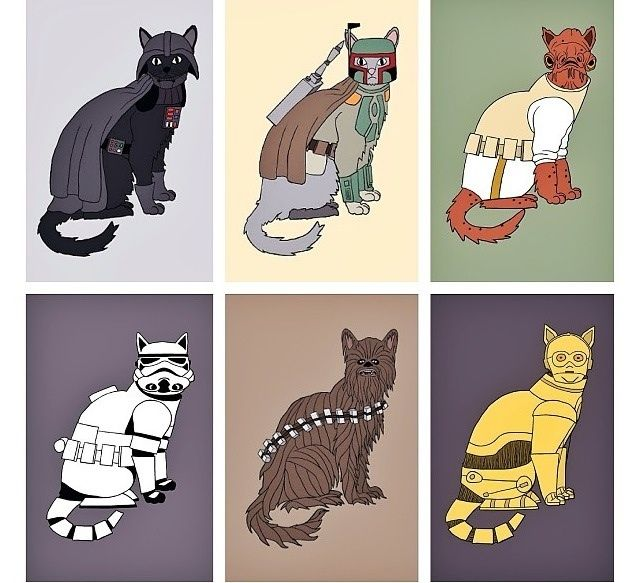 May The 4th Be With You Cat: 98 Best Images About Crazy Cat Lady On Pinterest