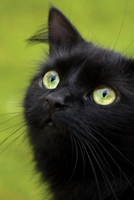 """When the tea is brought at five o'clock And all the neat curtains are drawn with care, The little black cat with bright green eyes Is suddenly purring there"" ~ Harold Monro"