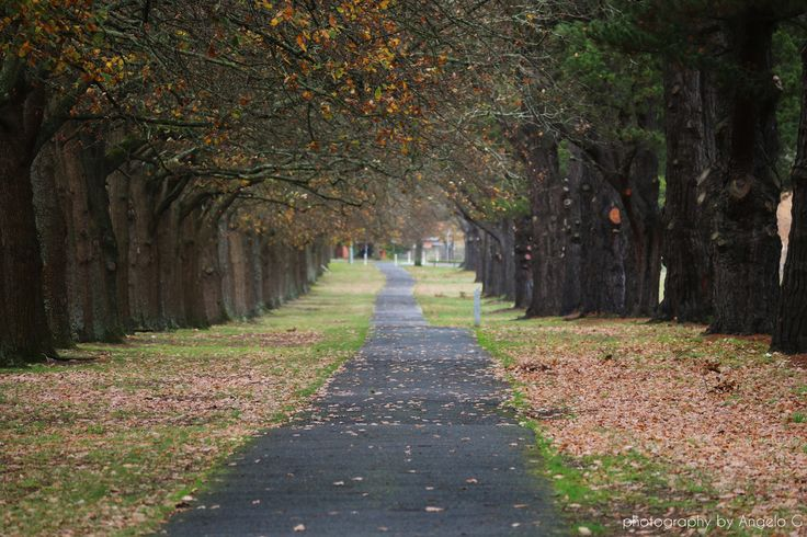 Victoria Park, Ballarat - the place I call home!! Photography by Angelo Gedult