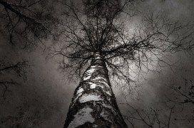 Boom, De Natuur, Bomen, Tijdschrift