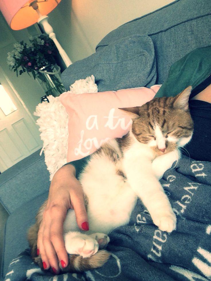 My kittycat named Karel❤️