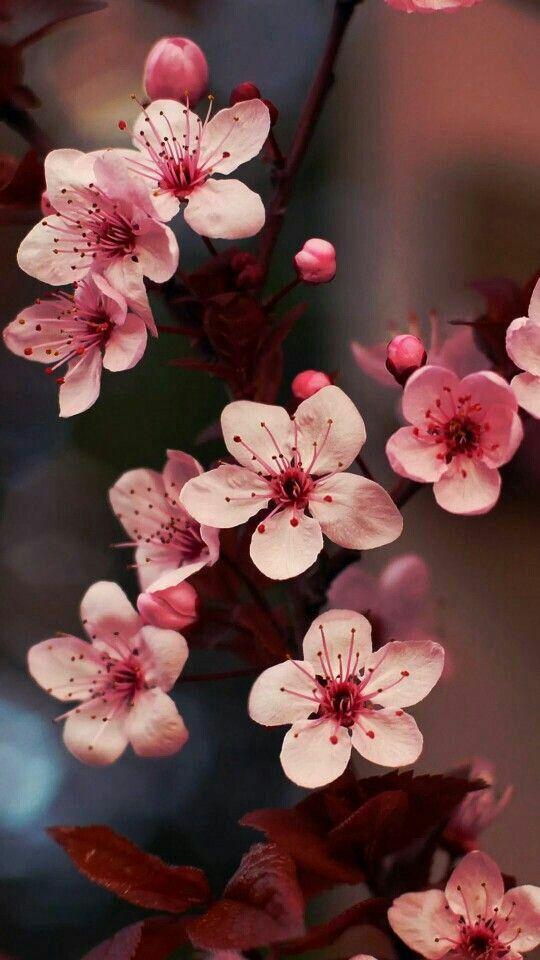 Pin By Xiomara Rodriguez On Fondos De Pantalla Florales Paisajes Y Mas Flower Aesthetic Flower Phone Wallpaper Flower Wallpaper