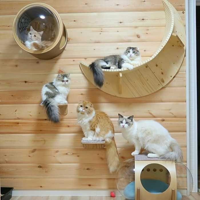 猫の幸せそうな顔がみたい 賃貸でもokなキャットウォークdiy リノベアイデア集 キナリノ キャット ウォーク Diy 猫用ベッド ねこ インテリア