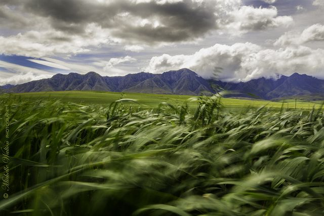 Overberg | South Africa #SouthAfrica