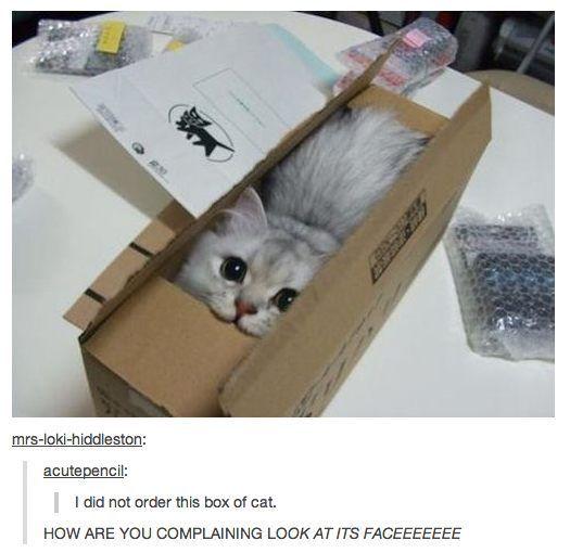 Box of cat awww