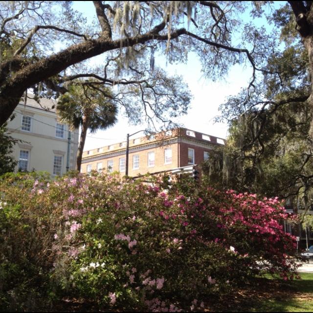 Oglethorpe Street - Savannah, GA