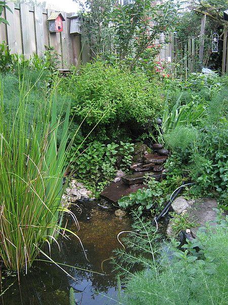 Vroege Vogels: Tuinreservaten Omschrijving Relatief kleine tuin met bes dragende struiken en heesters, een kruidenlaag (o.a.vlinderbloemigen) Een kleine, natuurlijke vijver. Variatie in reliëf en in droge en natte delen. Ruige hoekjes met o.a. tuinafval. Grootte:40 Ligging:ZuidWest  Type tuin:Natuurlijke tuin Grondsoort:Zandgrond Uren werk:> 3 uur in de week