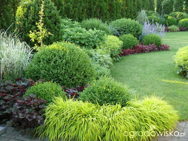 Ogród mały, ale pojemny;) - strona 124 - Forum ogrodnicze - Ogrodowisko