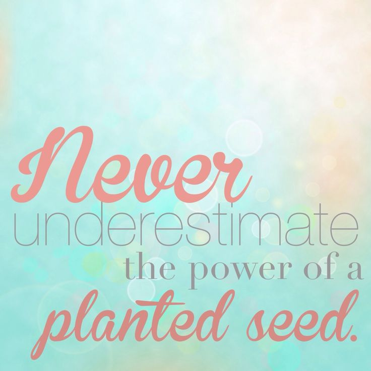 Quotes About Planting Seeds For Life Stunning Best 25 Planting Seeds Quotes Ideas On Pinterest  Seed Quotes
