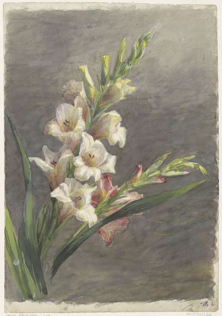 Gladiolen, Gerardina Jacoba van de Sande Bakhuyzen, 1836 - 1895