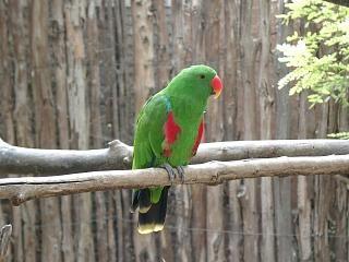 Zoobotanico Jerez :: LORO ECLÉCTICO