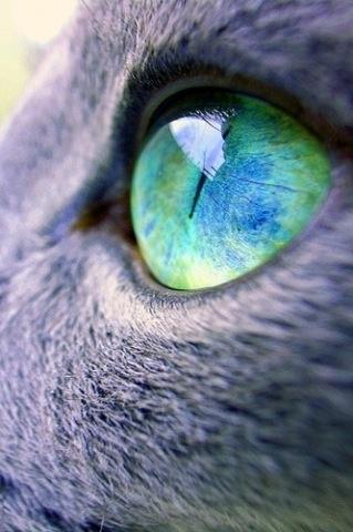 amazing pic, beautiful eye color