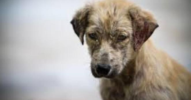 Firma esta petición para crear un hospital veterinario publico en Uruguay!!