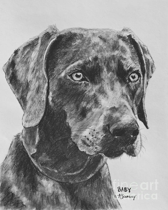 79 Best Images About Pet Art On Pinterest | Charcoal Drawings Featured And Black Cocker Spaniel