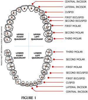 94 Best Dental Assistant Stuff Images On Pinterest