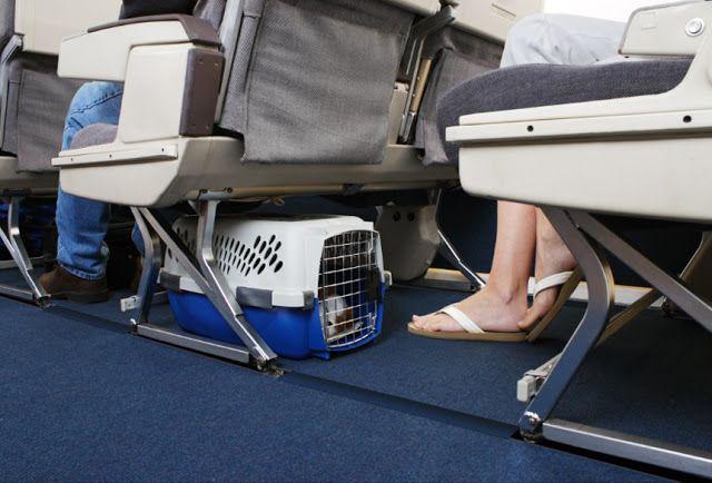 Mutlu Patilerr: Evcil Hayvanlarla Uçuş ve Seyahat