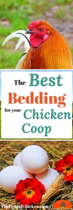 Are you using the best bedding for your backyard chicken coop? Here's your options!