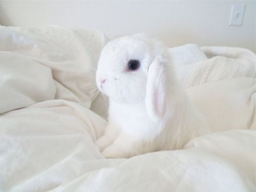 {sleepy bunny} the amount of cute in this image is ridiculous