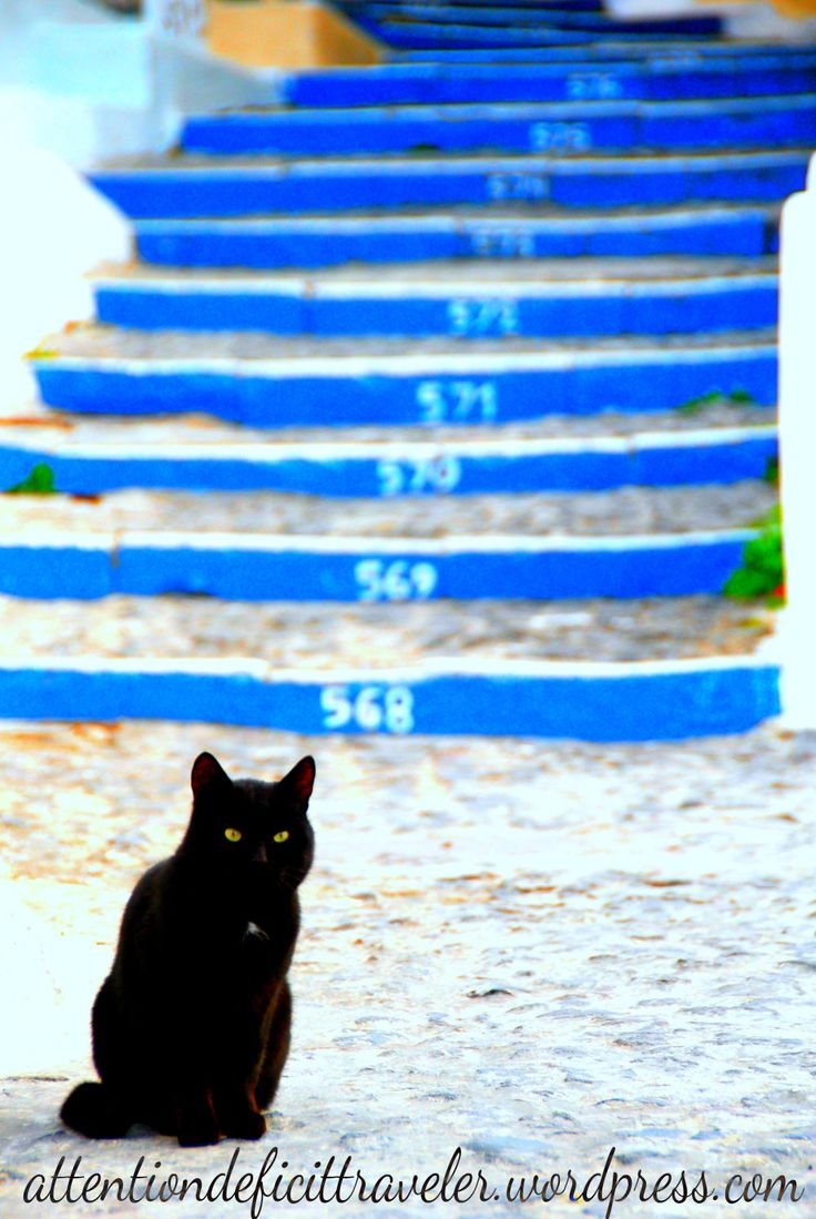 cat and stairs in Thira -Santorini, Greece