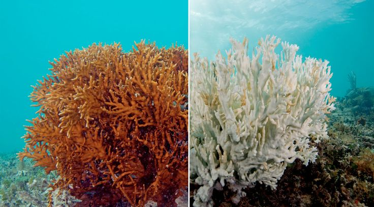 Two-thirds of the reef is at risk of dying.