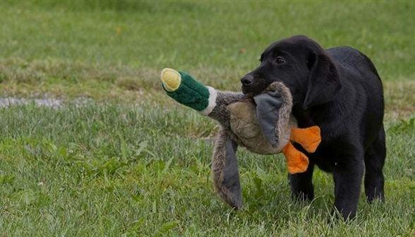 Dog Training Bend Oregon On Command Dog Training Yorktown