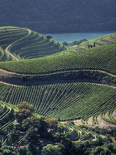 Douro Valley and its #PortWine vineyards - Portugal