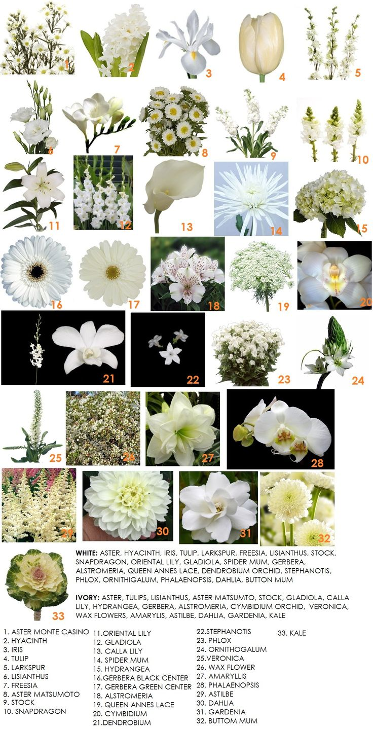 White and cream flower ideas.  In the Spring we have; Tulips, Hyacinth and Iris. Summer brings with it; Larkspur, Queen Annes Lace and Astilbe. While the Fall showcases; Amarylis and Kale. All the remaining flowers are available throughout most of the year.