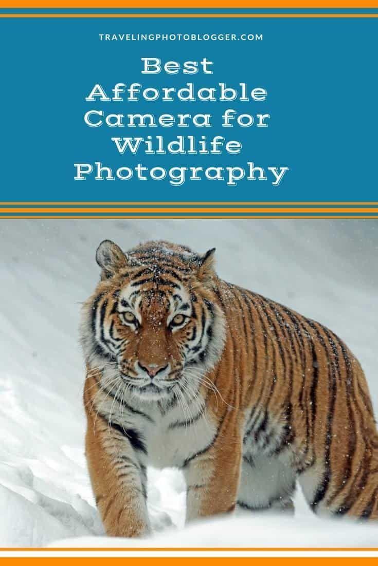Best Affordable Camera For Wildlife Photography Wildlife Photography Wildlife Photography