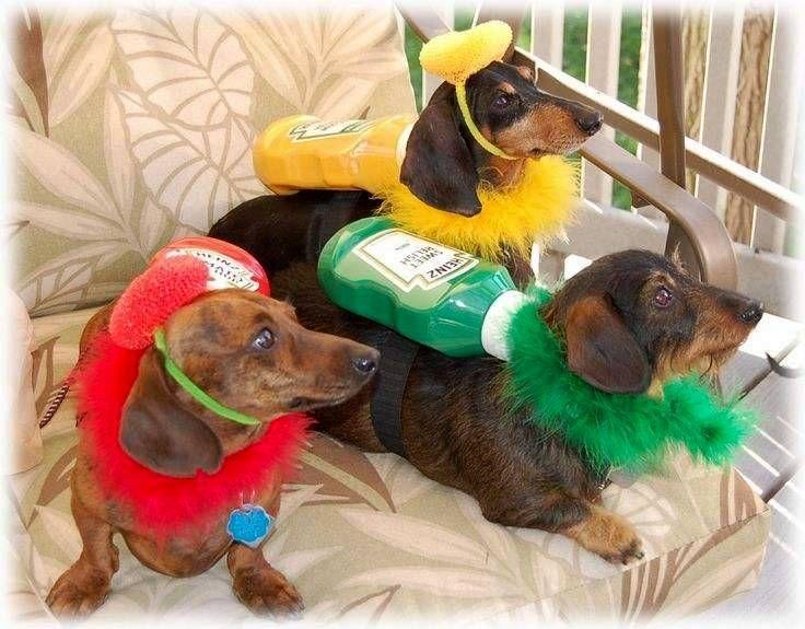 17 best ideas about Dachshund Halloween Costumes on Pinterest ...