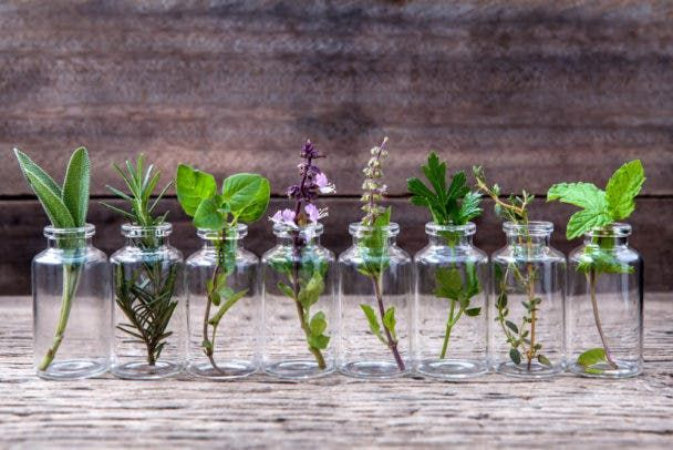 10 Hierbas Aromáticas Que Puede Cultivar En Casa Usando Sólo Agua Plantas En Agua Plantas Aromaticas De Interior Cultivo De Plantas