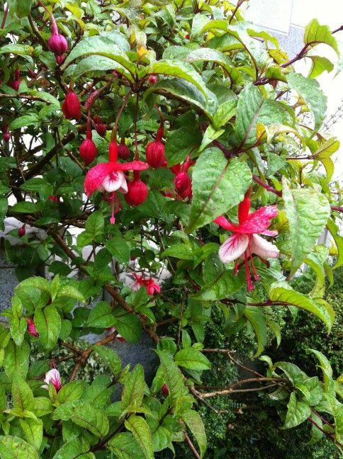 Nice flowers of #CaminoFrance