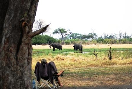 Elephants at Khwai Camp