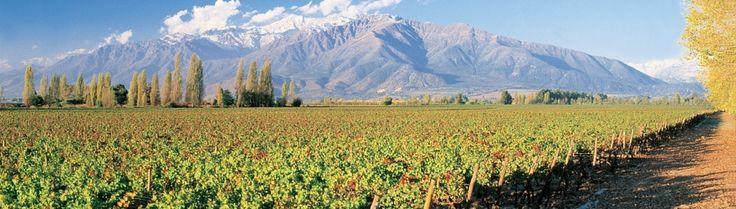What qualities make Puente Alto terroir the best place for Cabernet Sauvignon?  http://www.conchaytoro.com/winemakers-journal/what-qualities-make-puente-alto-terroir-the-best-place-for-cabernet-sauvignon/