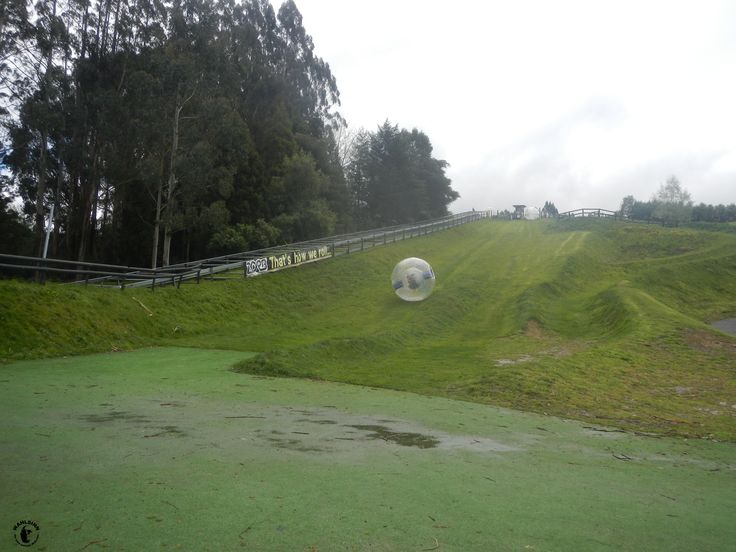 Zorb bei Rotorua // Neuseeland