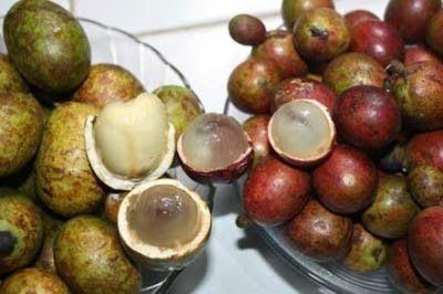 buah matoa untuk ibu hamil - Google Search