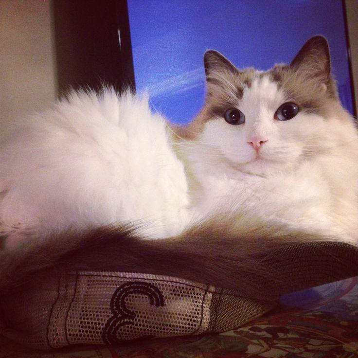 Cat in hat!