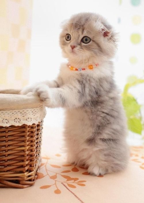 Pin By Pretty In Pink On Kittens Cute Cats Kittens Cutest Cats