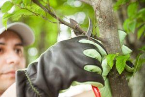 Working with an Alpharetta Tree Arborist Near Me