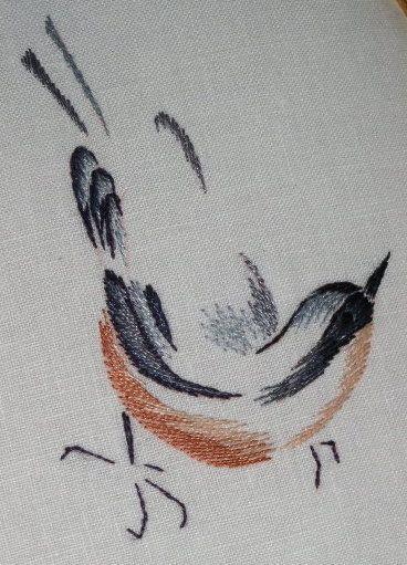 http://www.archive-host2.com/membres/images/1336321151/bestioles/oiseaux/sitelle/sit_lpp1.jpg