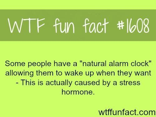 "#1608 - Some people have a ""natural alarm clock"" allowing them to wake up when they want - This is actually caused by a stress hormone"