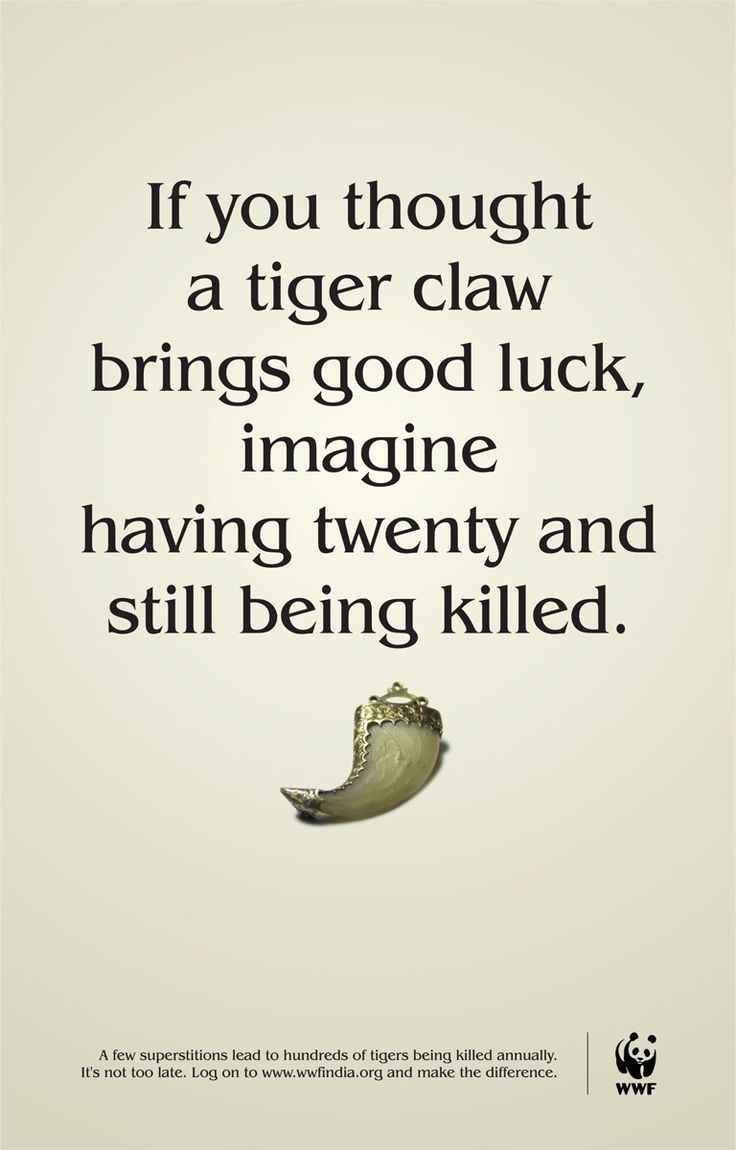 best 25 save the tiger ideas on pinterest a tiger wild tiger