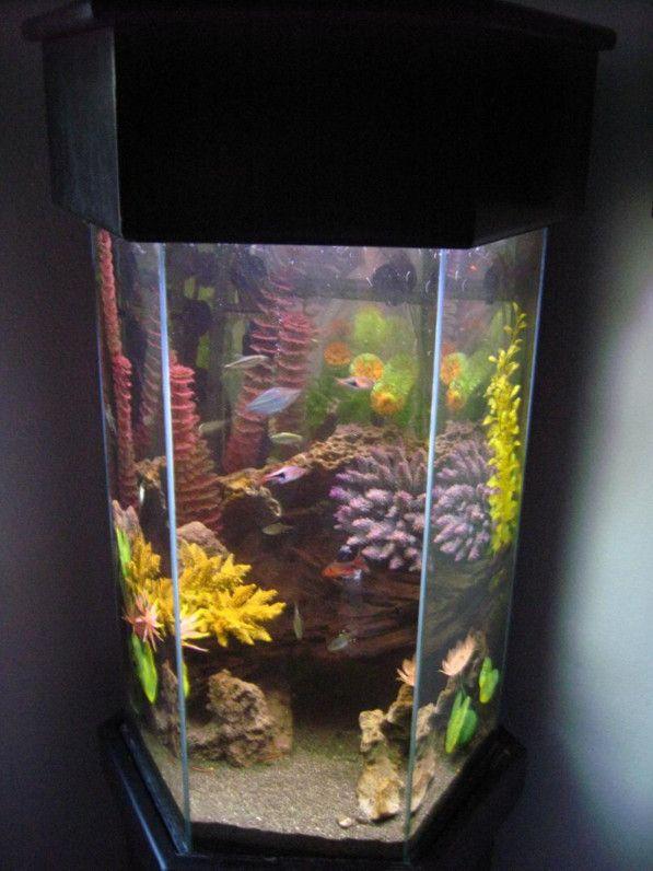 20 gallon hexagon aquarium