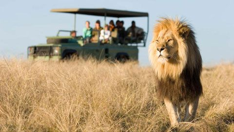 Garden Route safaris - see the Big Five