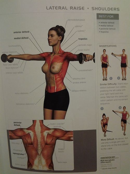 muscle diagram - lateral raise #fav shoulders workout exercise illustrated anatomy howto