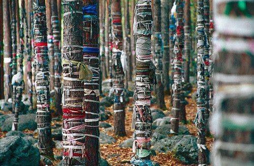Siberian spirit trees  http://www.tengerism.org/sacred_mountains.html