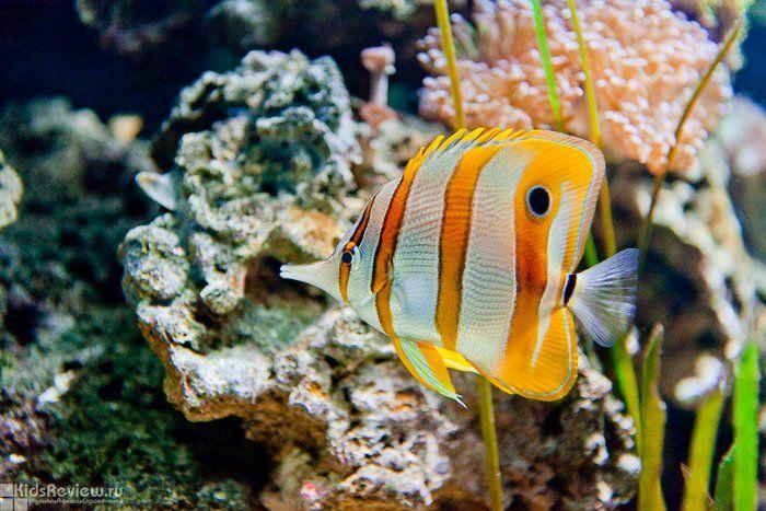 The Helsinki Sea Life Aquarium, Finland, photo
