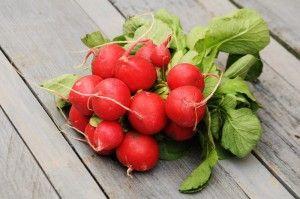 Rzodkiewka – wiosenny powiew świeżości. O zdrowotnych właściwościach rzodkiewek.